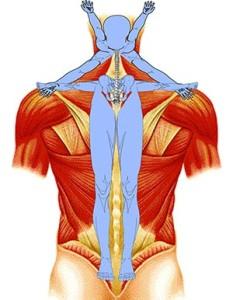 Cervical Spinal